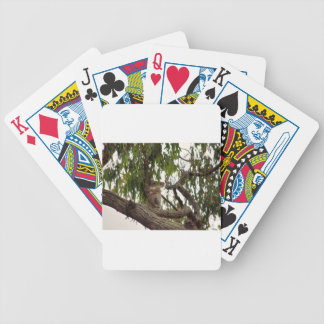 KOALA IN TREE RURAL QUEENSLAND AUSTRALIA BICYCLE PLAYING CARDS
