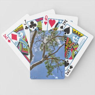 KOALA IN TREE RURAL QUEENSLAND AUSTRALIA BICYCLE PLAYING CARDS