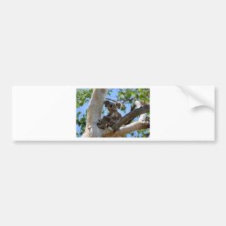 KOALA IN TREE RURAL QUEENSLAND AUSTRALIA BUMPER STICKER