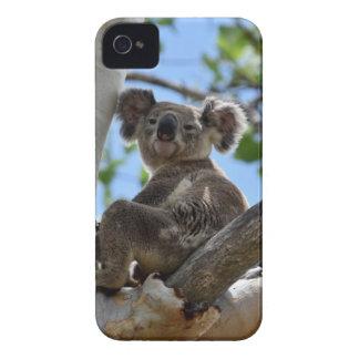 KOALA IN TREE RURAL QUEENSLAND AUSTRALIA Case-Mate iPhone 4 CASE