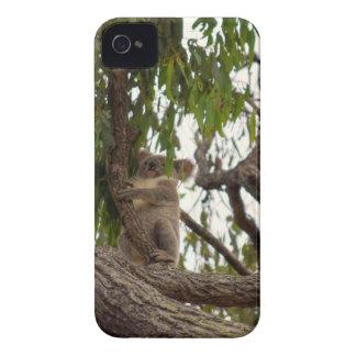 KOALA IN TREE RURAL QUEENSLAND AUSTRALIA Case-Mate iPhone 4 CASES