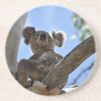 KOALA IN TREE RURAL QUEENSLAND AUSTRALIA COASTER