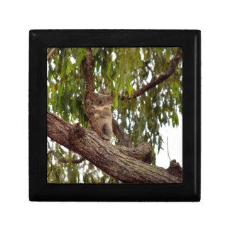 KOALA IN TREE RURAL QUEENSLAND AUSTRALIA GIFT BOX