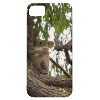 KOALA IN TREE RURAL QUEENSLAND AUSTRALIA iPhone 5 CASE