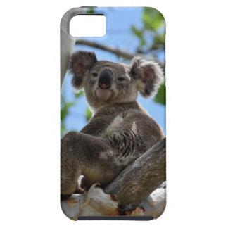 KOALA IN TREE RURAL QUEENSLAND AUSTRALIA iPhone 5 COVER