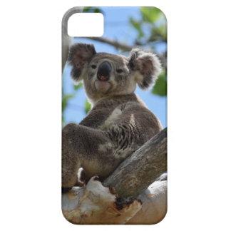 KOALA IN TREE RURAL QUEENSLAND AUSTRALIA iPhone 5 COVERS