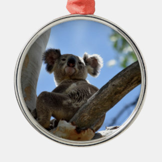 KOALA IN TREE RURAL QUEENSLAND AUSTRALIA METAL ORNAMENT