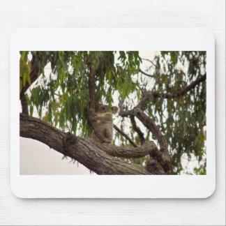 KOALA IN TREE RURAL QUEENSLAND AUSTRALIA MOUSE PAD