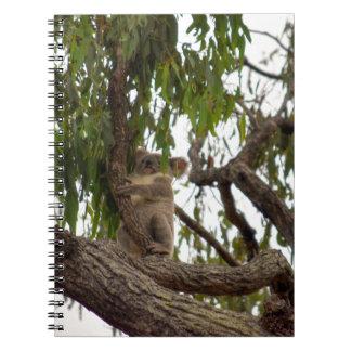 KOALA IN TREE RURAL QUEENSLAND AUSTRALIA NOTEBOOK