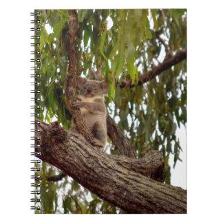 KOALA IN TREE RURAL QUEENSLAND AUSTRALIA NOTEBOOKS