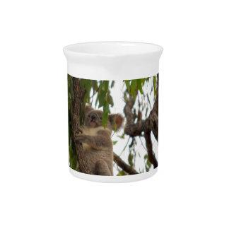 KOALA IN TREE RURAL QUEENSLAND AUSTRALIA PITCHER