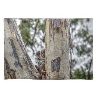 KOALA IN TREE RURAL QUEENSLAND AUSTRALIA PLACEMAT