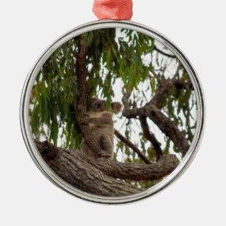 KOALA IN TREE RURAL QUEENSLAND AUSTRALIA Silver-Colored ROUND DECORATION