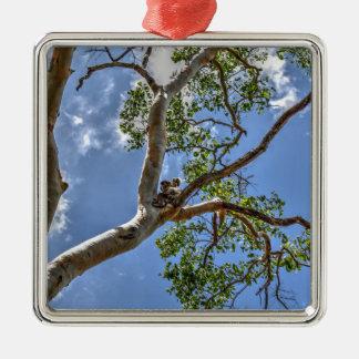 KOALA IN TREE RURAL QUEENSLAND AUSTRALIA Silver-Colored SQUARE DECORATION