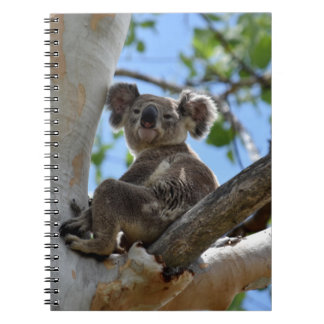 KOALA IN TREE RURAL QUEENSLAND AUSTRALIA SPIRAL NOTEBOOK