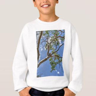 KOALA IN TREE RURAL QUEENSLAND AUSTRALIA SWEATSHIRT