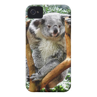 Koala iPhone 4 Case-Mate Case