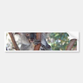 Koala.JPG Bumper Sticker