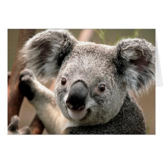 Koala line card