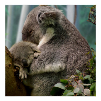Koala Mom and New Baby Poster