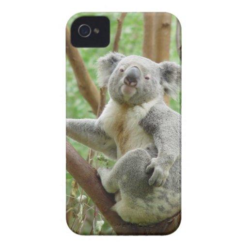 Koala on a tree blackberry bold covers