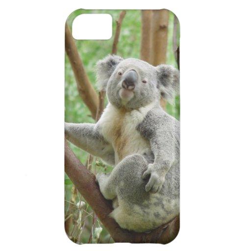 Koala on a tree iPhone 5C covers