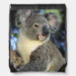 Koala, Phascolarctos cinereus), Australia, Backpacks