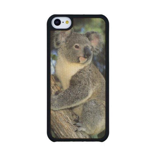 Koala, Phascolarctos cinereus), Australia, Carved® Maple iPhone 5C Slim Case