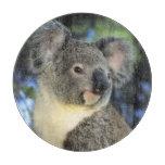 Koala, Phascolarctos cinereus), Australia, Cutting Board