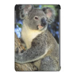 Koala, Phascolarctos cinereus), Australia, iPad Mini Cases