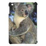 Koala, Phascolarctos cinereus), Australia, iPad Mini Cover