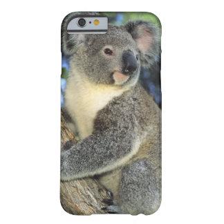 Koala Phascolarctos cinereus Australia iPhone 6 Case