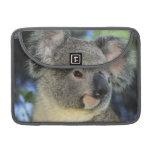 Koala, Phascolarctos cinereus), Australia, Sleeves For MacBook Pro