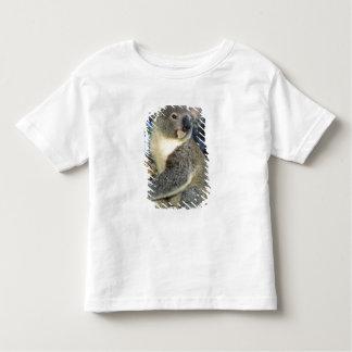 Koala, Phascolarctos cinereus), Australia, T Shirts