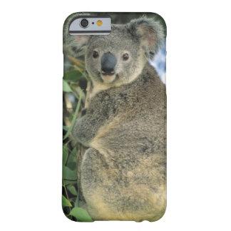 Koala, Phascolarctos cinereus), endangered, Barely There iPhone 6 Case