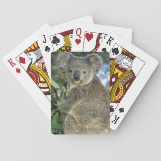 Koala, Phascolarctos cinereus), endangered, Poker Deck