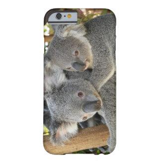 Koala Phascolarctos cinereus Queensland . iPhone 6 Case