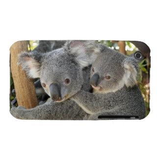 Koala Phascolarctos cinereus Queensland . Case-Mate iPhone 3 Case