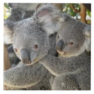Koala Phascolarctos cinereus Queensland . Large Square Tile