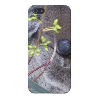 Koala Sleepy Covers For iPhone 5
