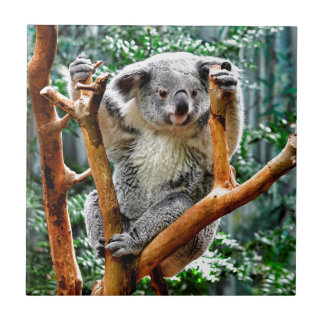 Koala Small Square Tile