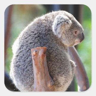 Koala Square Sticker