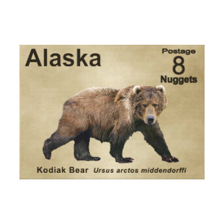 Kodiak Bear Stretched Canvas Print