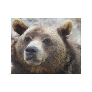 Kodiak Bear Closeup Canvas Print