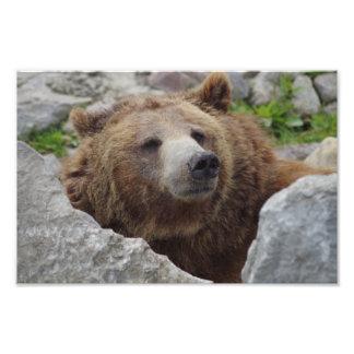 Kodiak Bear Photo Print