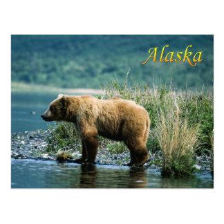 Kodiak brown bear, Alaska Postcard