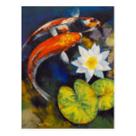 Koi and Water Lily Postcard