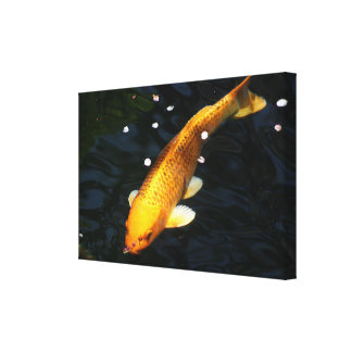 Koi Canvas