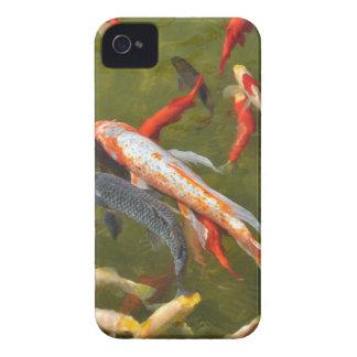 Koi carps in pond Case-Mate iPhone 4 case
