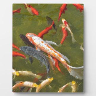 Koi carps in pond plaque